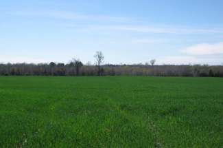 80 Acres Wagon Ford Rd, Beulaville