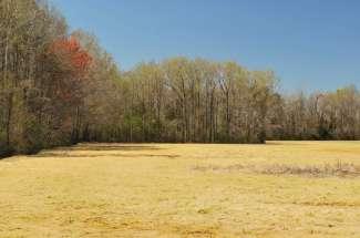 98 Acres on Neuse River, Kinston