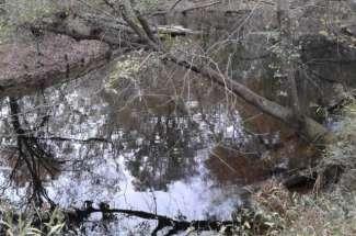 2.4 Acres on Trent River