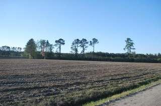 Heath Swamp Rd. Cove City 38 Acres
