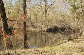 48 Acres on the Trent River